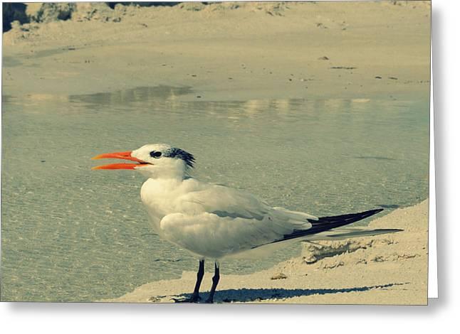 Coastal Decor Digital Greeting Cards - Seagull at the Beach Greeting Card by Patricia Awapara