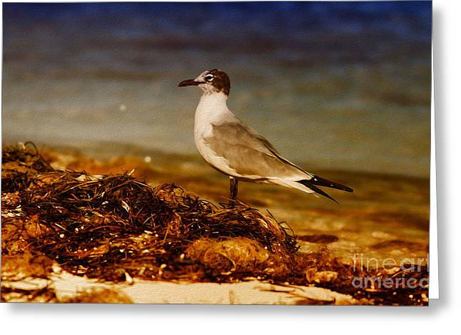 Scavenge Greeting Cards - Seagull At The Keys Greeting Card by Deborah Benoit