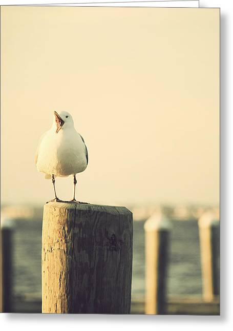 Shore Bird Print Greeting Cards - Seagull at the Shore Seaside New Jersey Greeting Card by Terry DeLuco