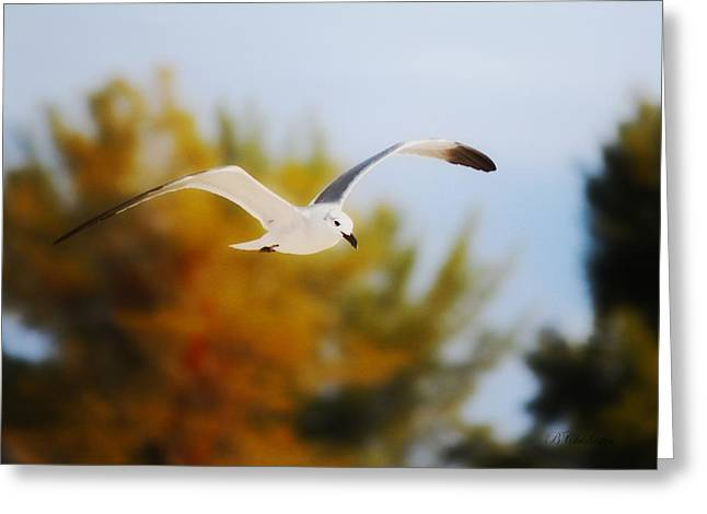 Flying Seagull Mixed Media Greeting Cards - Seagull Balance Greeting Card by Barbara Chichester