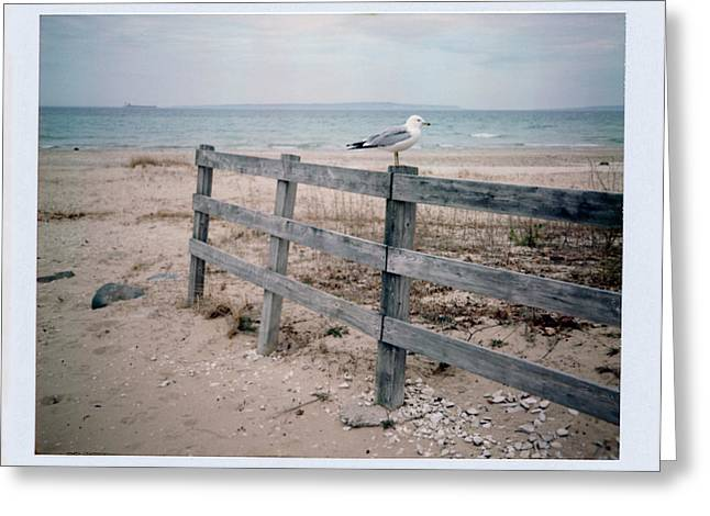 Mackinaw City Greeting Cards - Seagull Greeting Card by Brady D Hebert