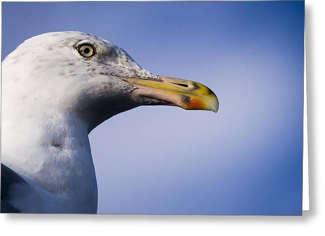 Seagull - Cape Neddick - Maine Greeting Card by Steven Ralser