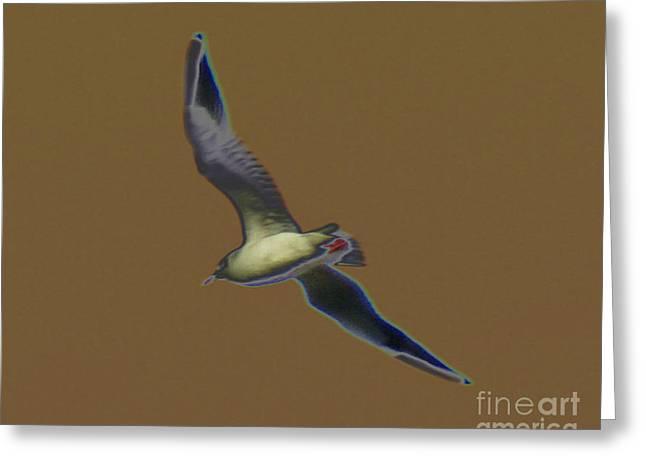 Sea Birds Greeting Cards - Seagull Greeting Card by Carol Lynch
