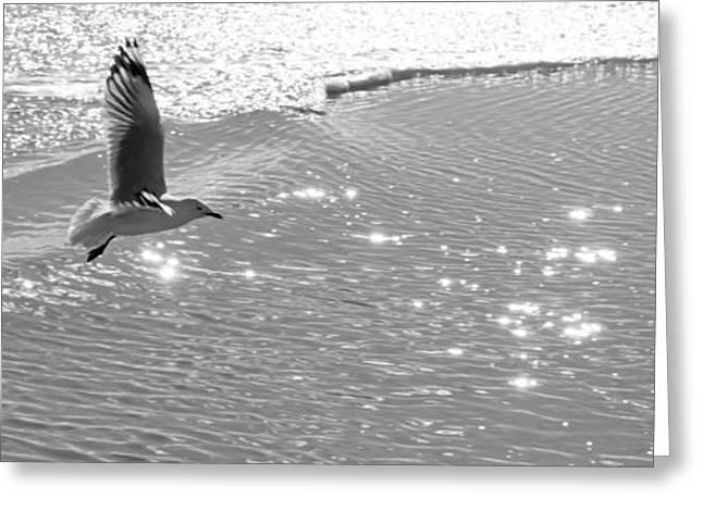Flying Seagull Greeting Cards - Seagull Greeting Card by Carole Lloyd