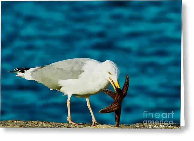 Seashell Picture Digital Greeting Cards - Seagull Dancing With A Star Greeting Card by Carol F Austin