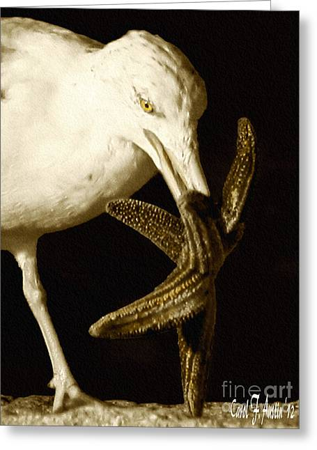 Seagull With Starfish Greeting Cards - Seagull Dancing with a Starfish Greeting Card by Carol F Austin