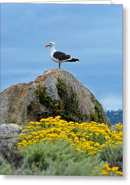 Point Lobos State Greeting Cards - Seagull Greeting Card by Donald Fink