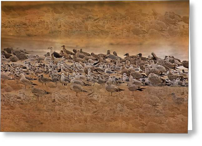 Seagulls Digital Greeting Cards - Seagull Dreamland Greeting Card by Betsy C  Knapp