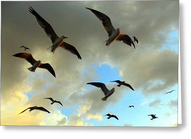 Cedar Key Greeting Cards - Seagull Flight 1 Greeting Card by Sheri McLeroy