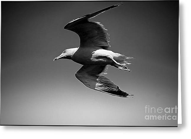 Flying Seagull Greeting Cards - Seagull flying higher  Greeting Card by Stefano Senise