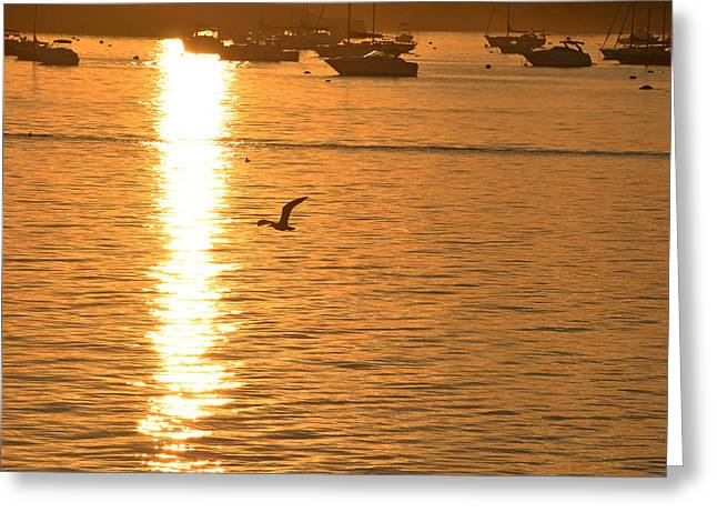 Flying Seagull Greeting Cards - Seagull flying into the Sunset Greeting Card by Toby McGuire