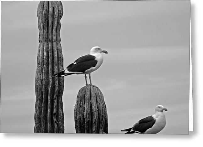 Seagull Hierarchy Greeting Card by Camilla Fuchs