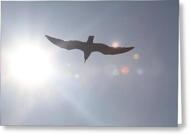 Photographers Conyers Greeting Cards - Seagull in Flight 8 Greeting Card by Cathy Lindsey