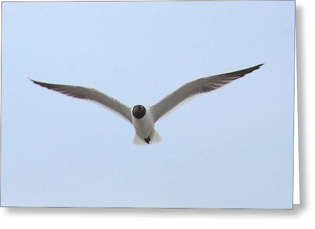 Sea Birds Greeting Cards - Seagull in Flight Greeting Card by Hal Gould
