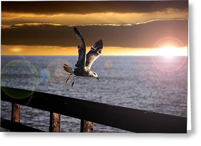 Seagull Flying Greeting Cards - Seagull in Flight Greeting Card by Martin Newman