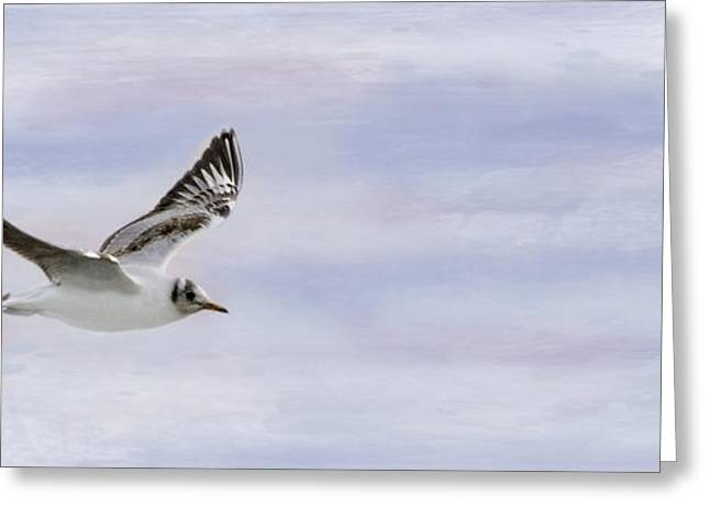 Flying Seagull Greeting Cards - Seagull In Pastels Greeting Card by Linsey Williams