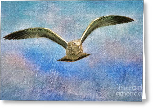 Clouds Deborah Benoit Greeting Cards - Seagull in the Storm Greeting Card by Deborah Benoit