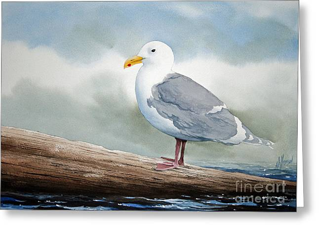 Print On Canvas Greeting Cards - Seagull Greeting Card by James Williamson