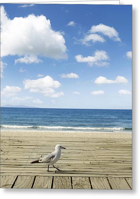 Beach Photograph Greeting Cards - Seagull Greeting Card by Les Cunliffe