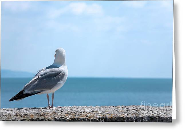 Front Room Digital Art Greeting Cards - Seagull Looking Out to Sea Greeting Card by Natalie Kinnear