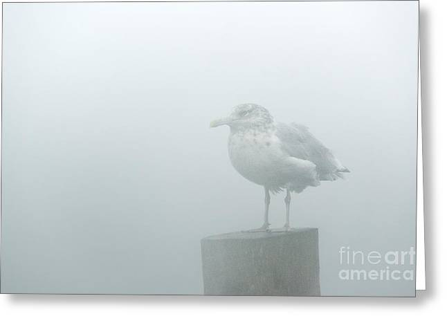 Muted Greeting Cards - Seagull Mist Greeting Card by John Greim