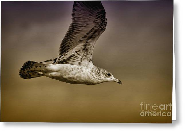 Flying Seagull Greeting Cards - Seagull Oil Greeting Card by Deborah Benoit