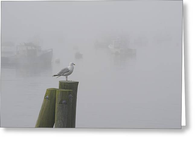 Maine Beach Greeting Cards - Seagull on a Foggy Morning Greeting Card by Mary Lee Dereske