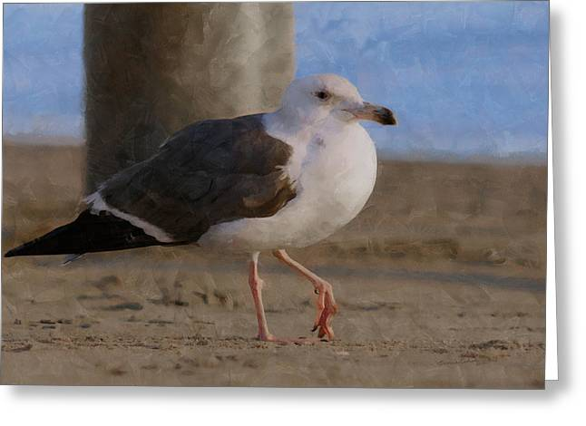 On The Beach Digital Greeting Cards - Seagull on the beach Greeting Card by Ernie Echols