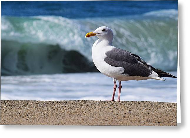 Seagulls On The Sand Greeting Cards - Seagull on the Beach Greeting Card by Richard Cheski
