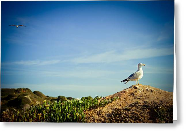 Feather Pyrography Greeting Cards - Seagull On The Rock Greeting Card by Raimond Klavins