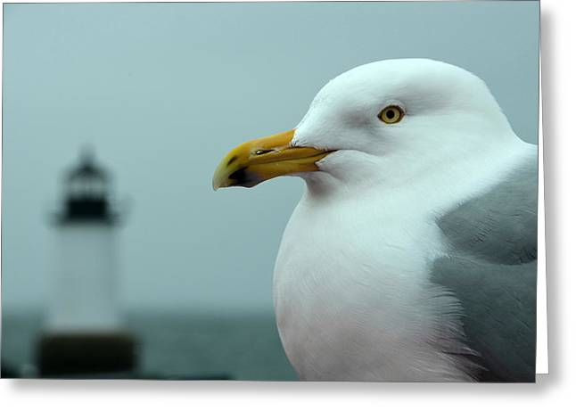 Ocean Photography Digital Art Greeting Cards - Seagull on Winter Island Greeting Card by Toby McGuire