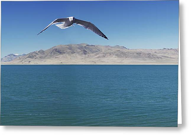 Flying Seagull Greeting Cards - Seagull Over Pyramid Lakenevada United Greeting Card by Richard Desmarais