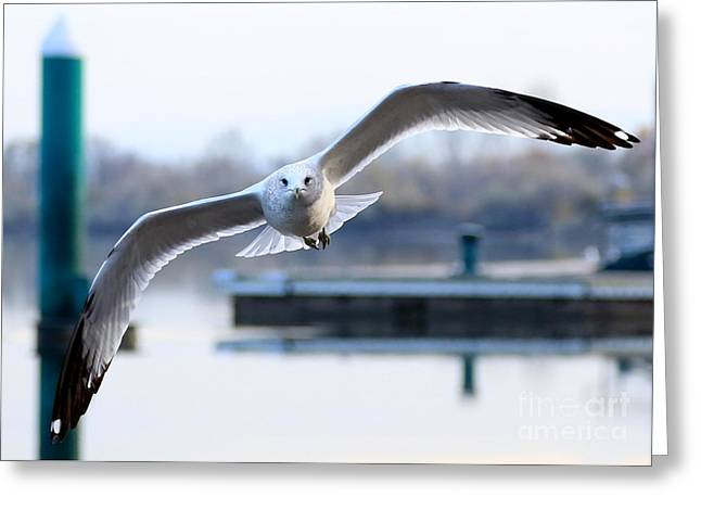 Larus Delawarensis Greeting Cards - Seagull over the Pier Greeting Card by Carol Groenen
