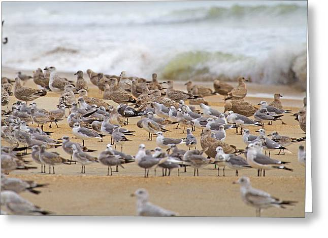 Family Time Greeting Cards - Seagull Paradise Greeting Card by Betsy C  Knapp
