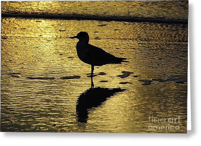Tidal Photographs Greeting Cards - Seagull Reflection Sunset Greeting Card by D Hackett