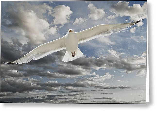 Flying Seagull Digital Art Greeting Cards - Seagull Greeting Card by Rick Mosher