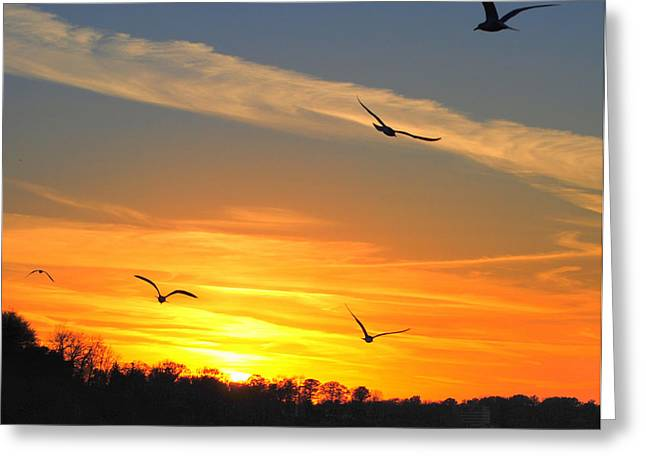 Ocean Vista Greeting Cards - Seagull Serenity Greeting Card by Frozen in Time Fine Art Photography