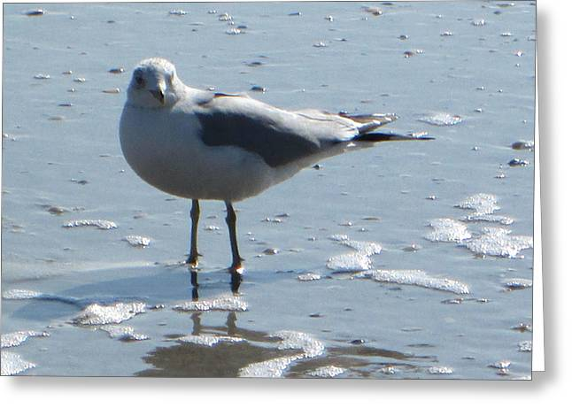 Seagull Greeting Card by Silvie Kendall