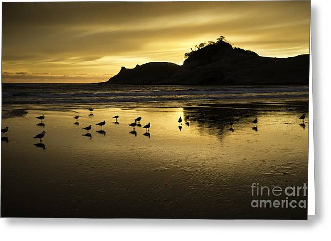 Tim Moore Greeting Cards - Seagull Sunset at Cape Kiwanda Greeting Card by Tim Moore