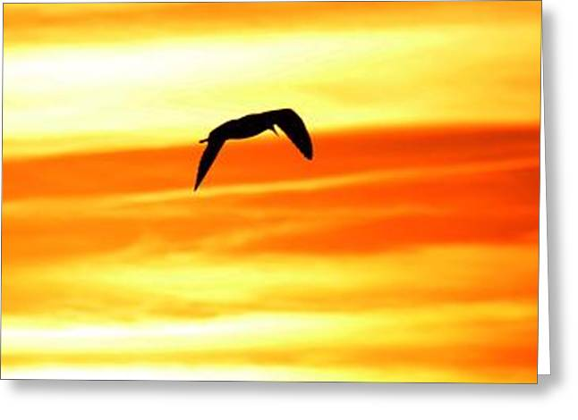 Flying Seagull Greeting Cards - Seagull Sunset Greeting Card by Henry Kowalski