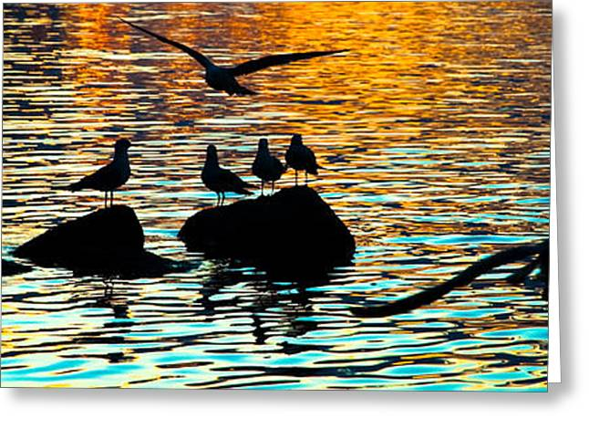 Flying Seagull Greeting Cards - Seagull Sunset Greeting Card by Jillian  Chilson