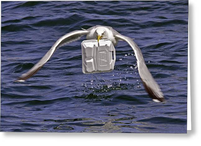 Boston Ma Greeting Cards - Seagull takeout service Greeting Card by David Freuthal