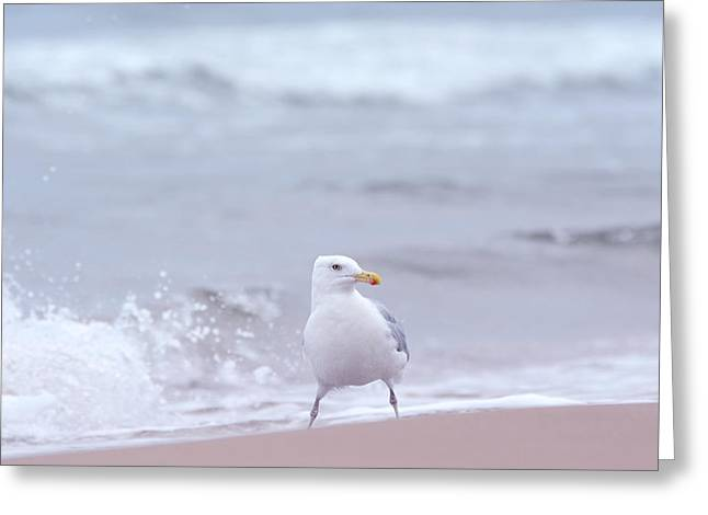 Seabirds Mixed Media Greeting Cards - Seagull Greeting Card by Toppart Sweden
