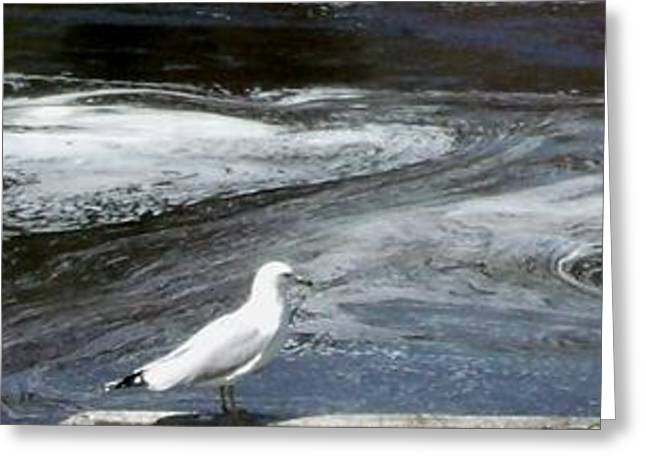 Purchase Greeting Cards - Seagull views water currents 2 Greeting Card by Gail Matthews