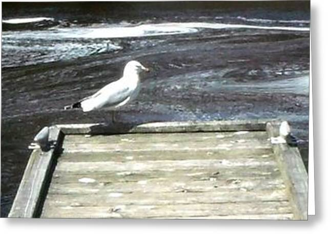 Purchase Greeting Cards - Seagull views water currents Greeting Card by Gail Matthews