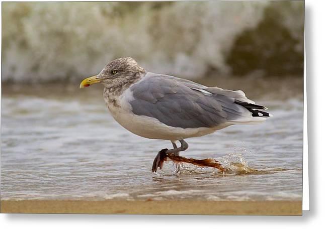 Seagull Walking Greeting Card by Allan Morrison