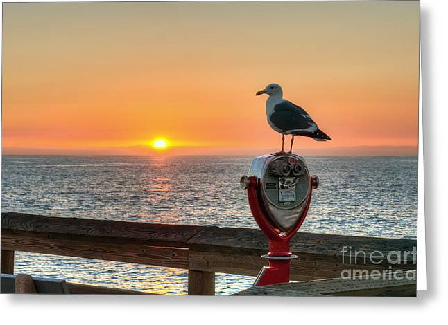 Wet Fly Greeting Cards - Seagull Watching The Sunset Greeting Card by Eddie Yerkish