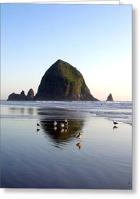 Seagull Reflection Greeting Cards - Seagulls And A Surfer Greeting Card by Will Borden