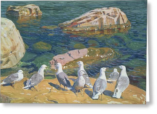 Seagull Paintings Greeting Cards - Seagulls Greeting Card by Arkadij Aleksandrovic Rylov
