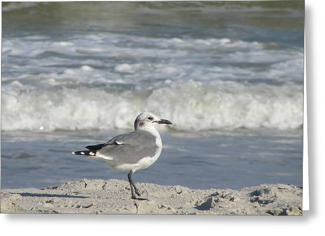Scavenge Greeting Cards - Seagulls at Fernandina 6 Greeting Card by Cathy Lindsey